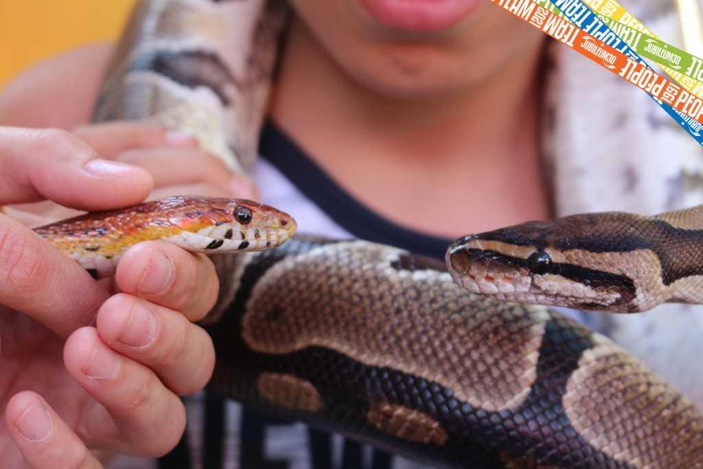 Kígyónézés a PT-ben